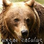 ursae_catulus